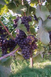 gastenverblijf-hagelander-hageland-wijngaardberg-wandeling